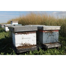 Single Box Hive (Approx. May 29)